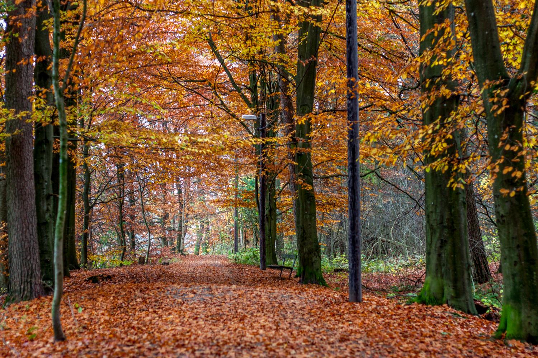 Orange Path