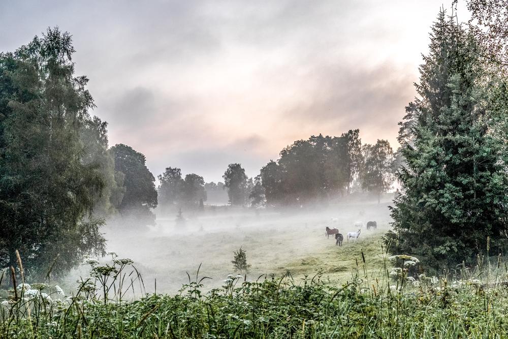 Nyköpings Fotoklubb 70 år. Foto: Gun Johansson